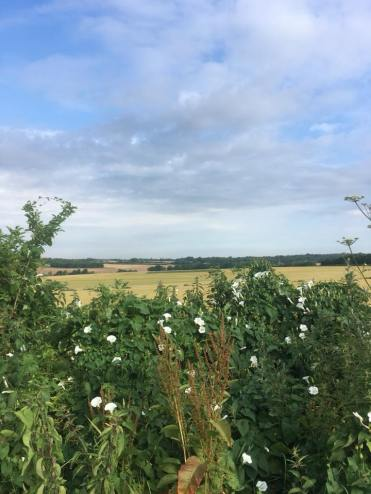 Alresford walks